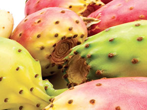 Nopal Oil – Prickly Pear Seeds